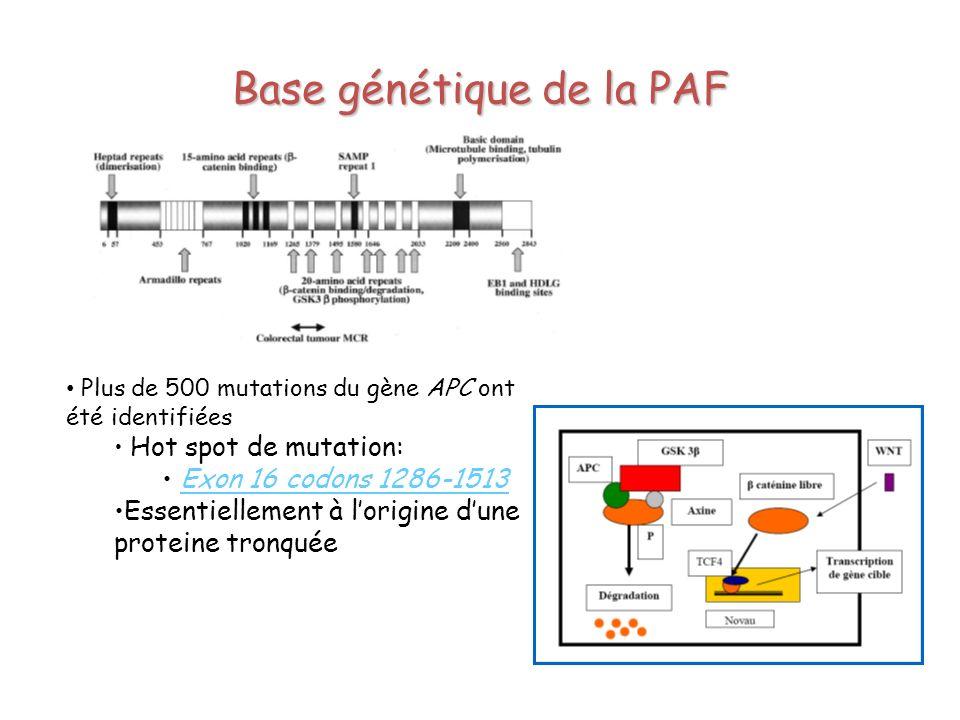 Base génétique de la PAF