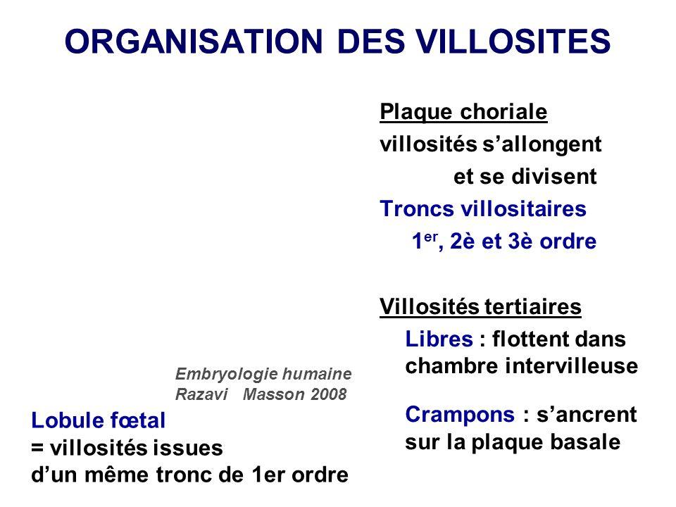 ORGANISATION DES VILLOSITES