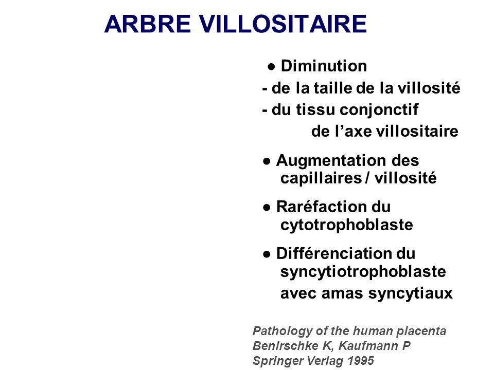 ARBRE VILLOSITAIRE ● Diminution - de la taille de la villosité