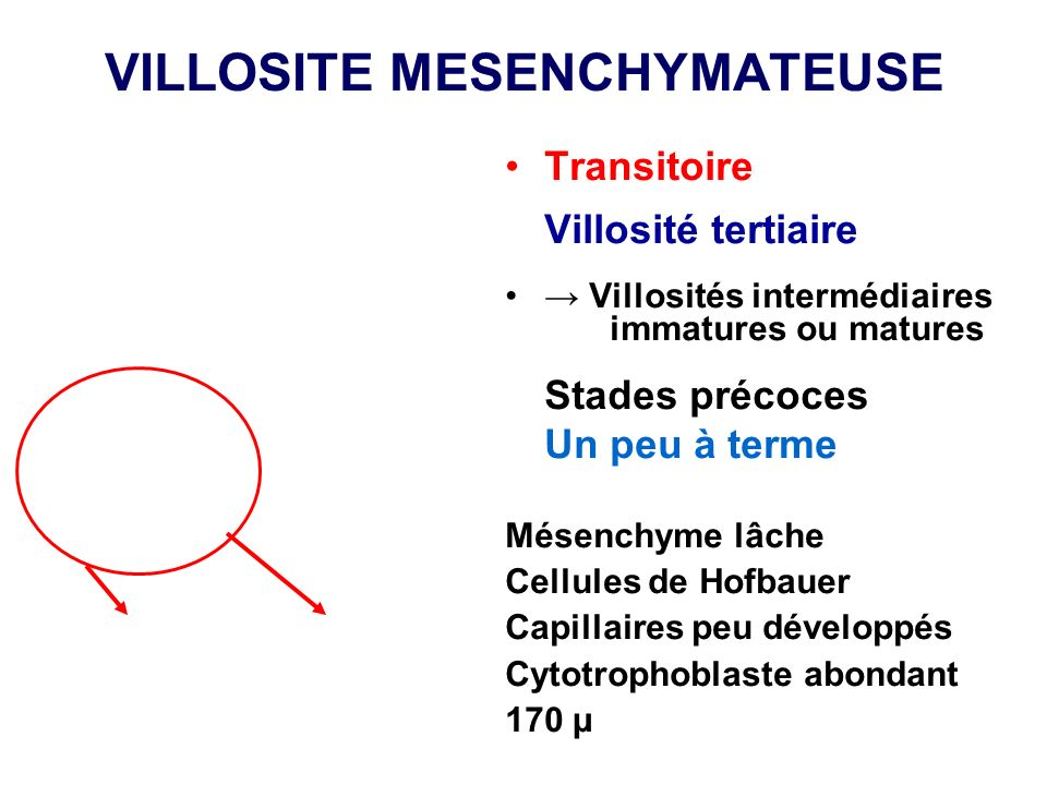 VILLOSITE MESENCHYMATEUSE