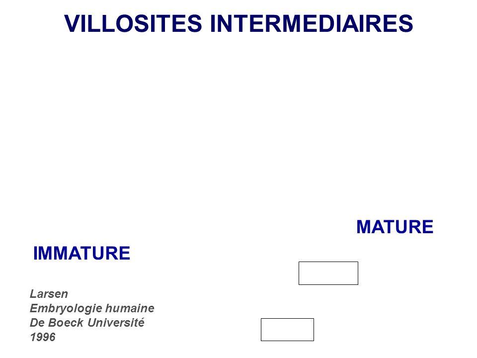 VILLOSITES INTERMEDIAIRES