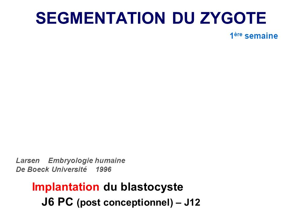 SEGMENTATION DU ZYGOTE