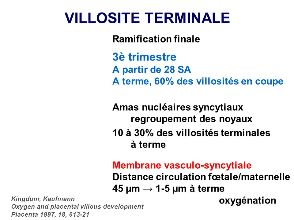 VILLOSITE TERMINALE 3è trimestre Ramification finale A partir de 28 SA