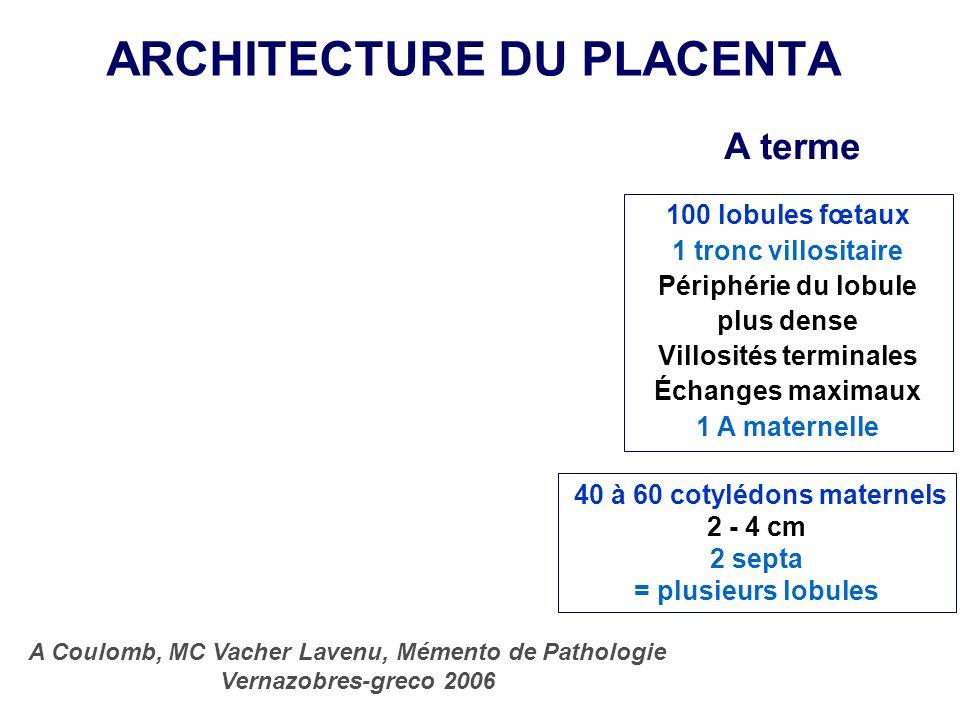 ARCHITECTURE DU PLACENTA