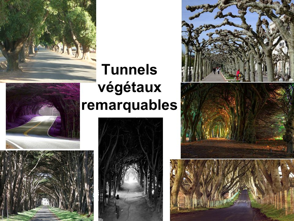 Tunnels végétaux remarquables