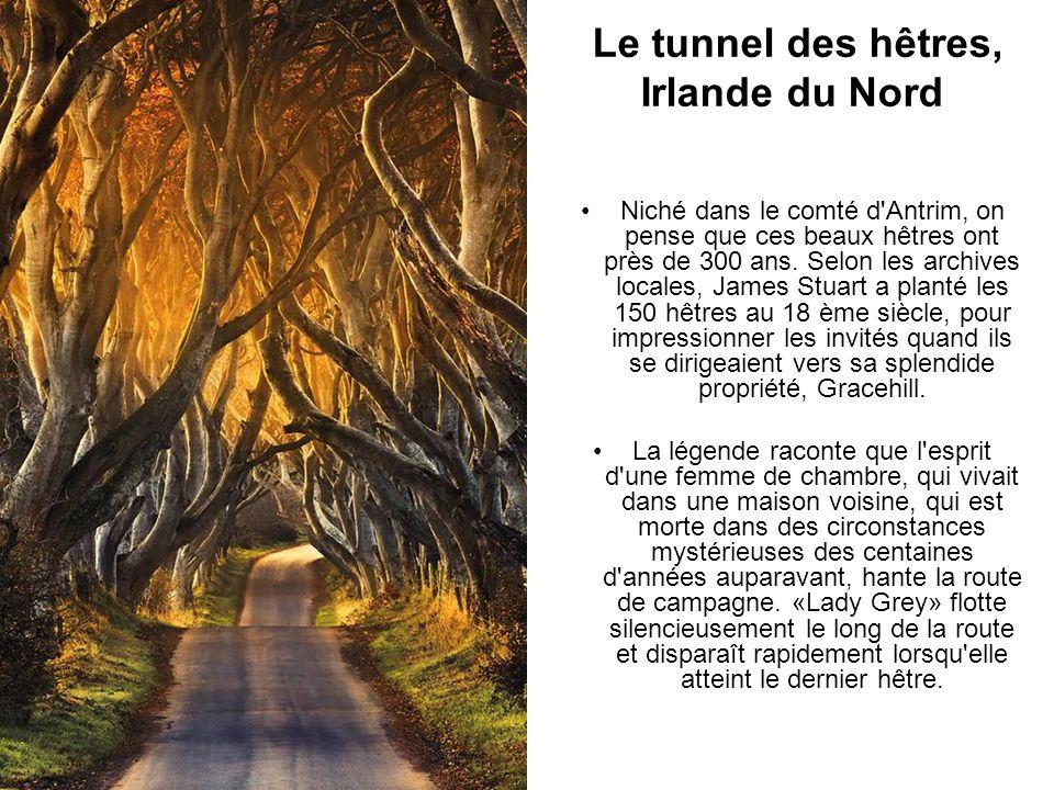 Le tunnel des hêtres, Irlande du Nord