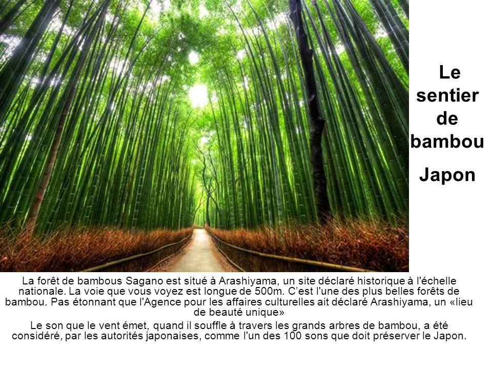 Le sentier de bambouJapon