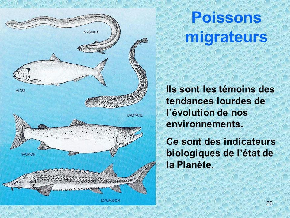 Poissons migrateurs Ils sont les témoins des tendances lourdes de l'évolution de nos environnements.