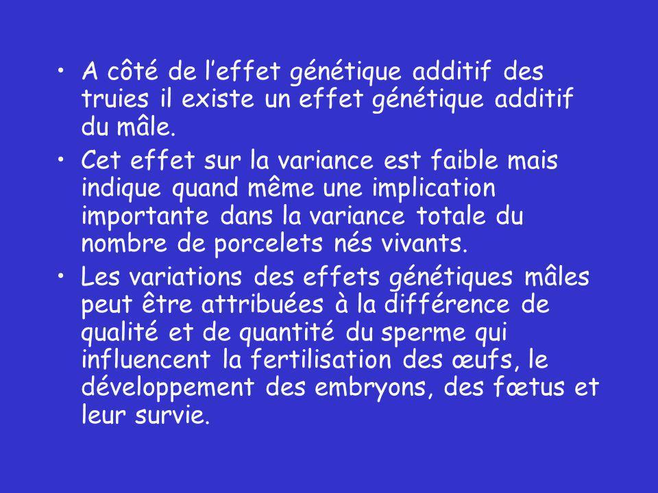 A côté de l'effet génétique additif des truies il existe un effet génétique additif du mâle.