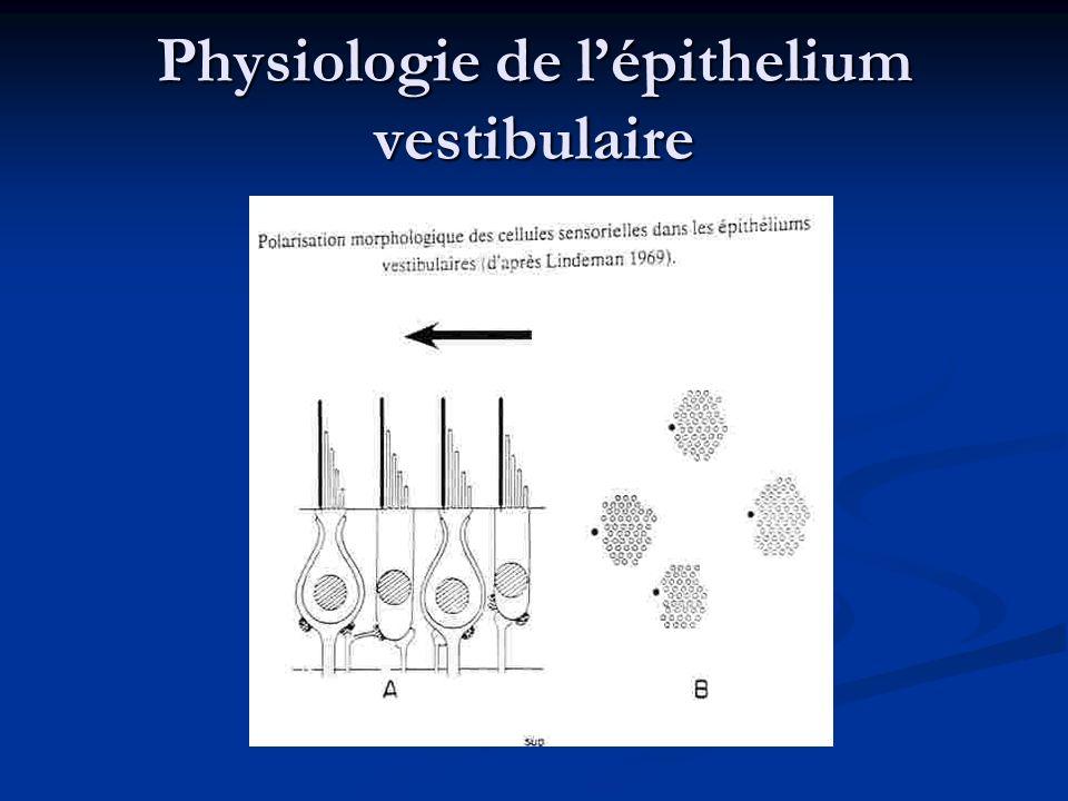 Physiologie de l'épithelium vestibulaire