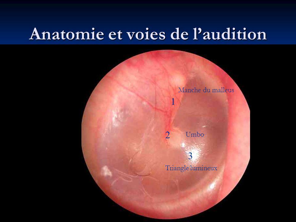Anatomie et voies de l'audition