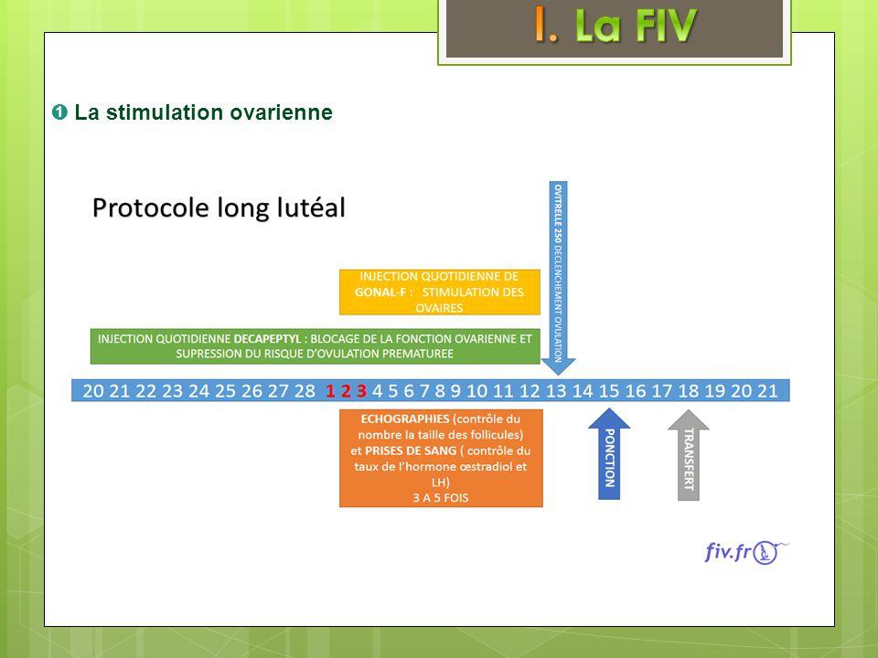 I. La FIV ➊ La stimulation ovarienne