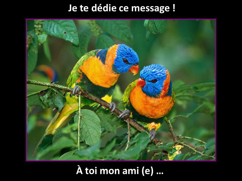 Je te dédie ce message ! À toi mon ami (e) …