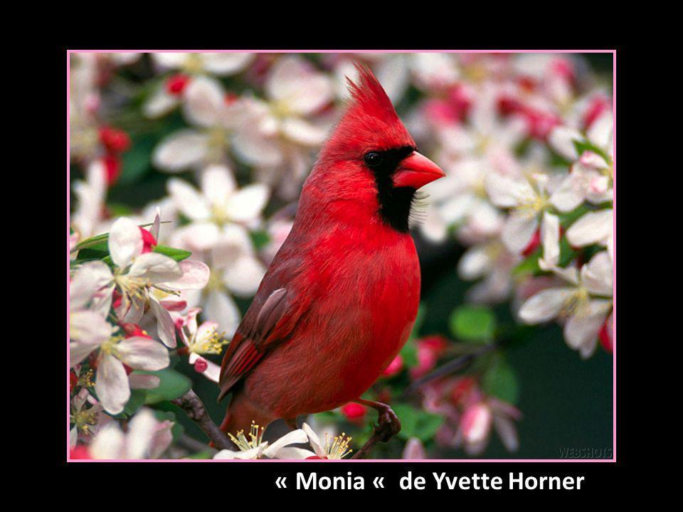 « Monia « de Yvette Horner
