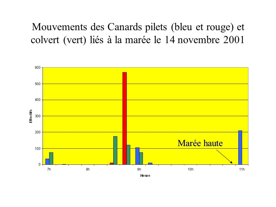 Mouvements des Canards pilets (bleu et rouge) et colvert (vert) liés à la marée le 14 novembre 2001