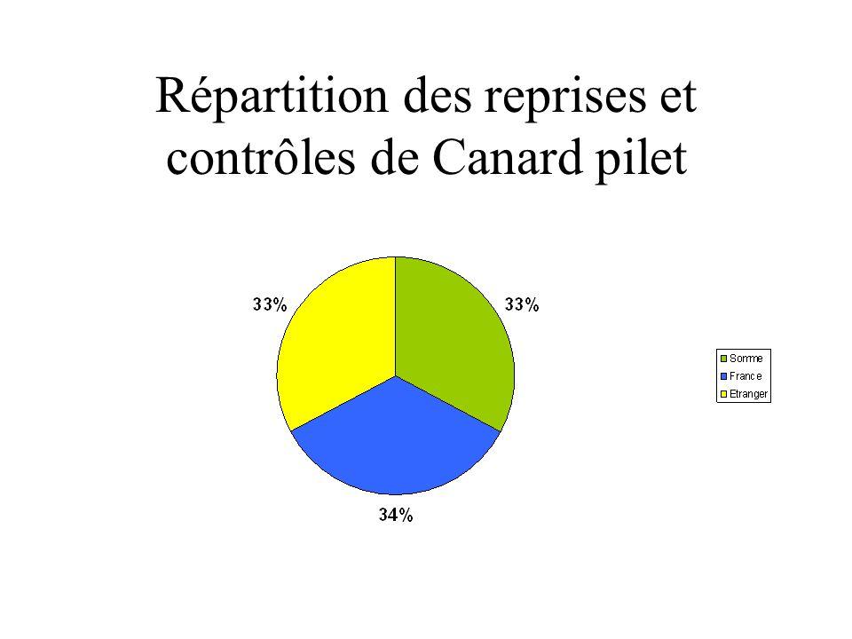 Répartition des reprises et contrôles de Canard pilet