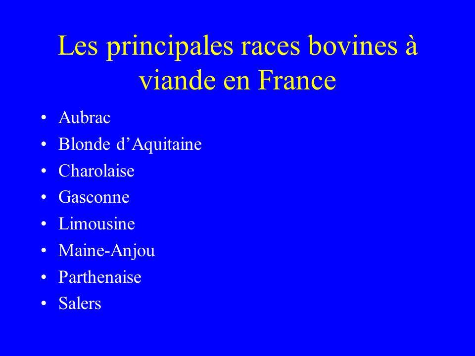 Les principales races bovines à viande en France
