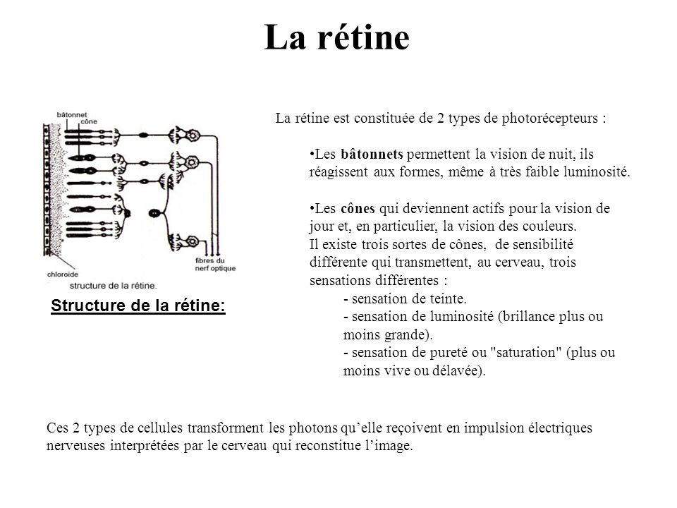 Structure de la rétine: