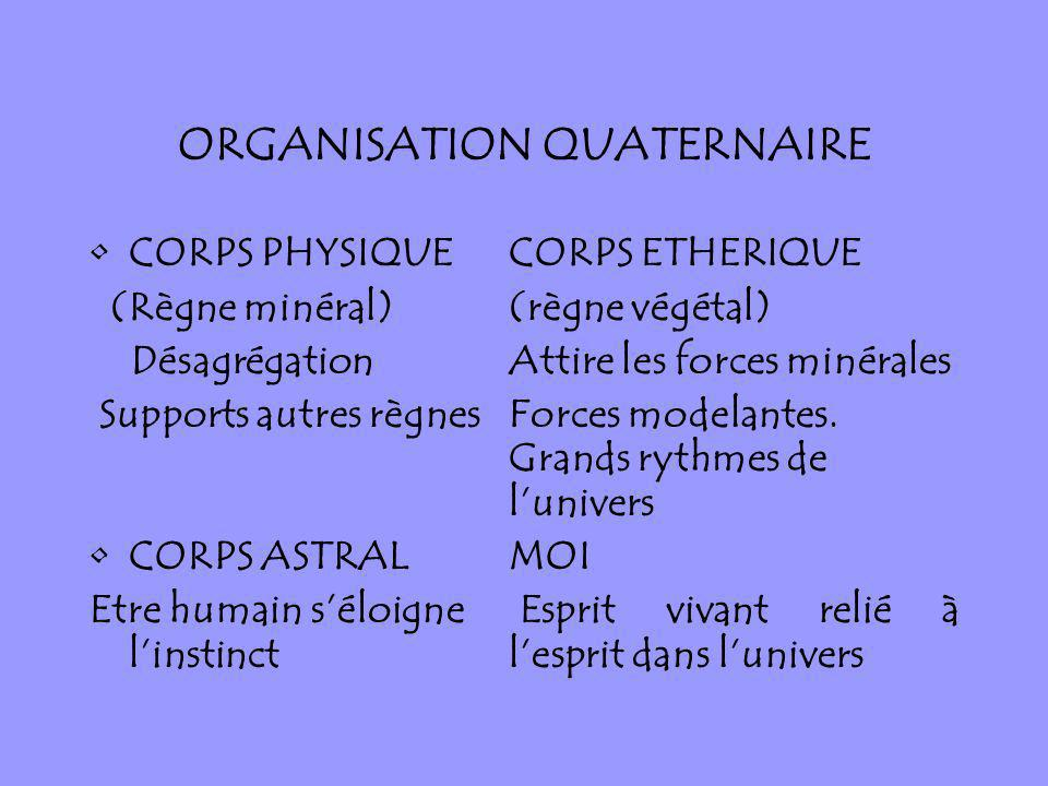 ORGANISATION QUATERNAIRE
