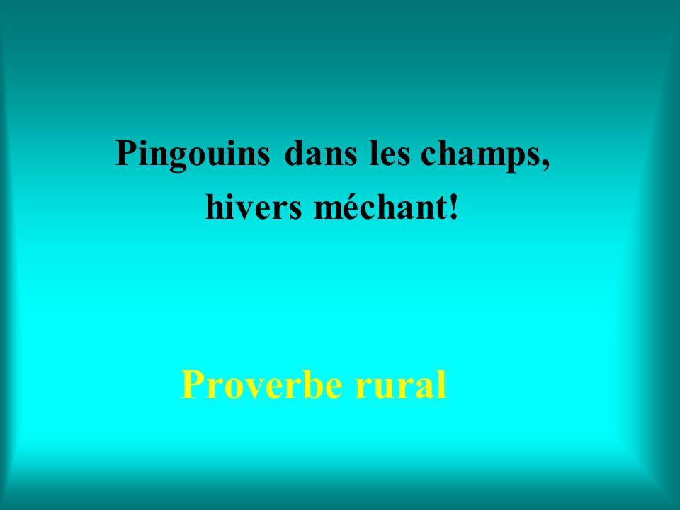 Pingouins dans les champs, hivers méchant!