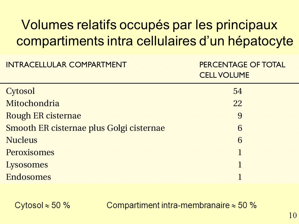 Cytosol  50 % Compartiment intra-membranaire  50 %