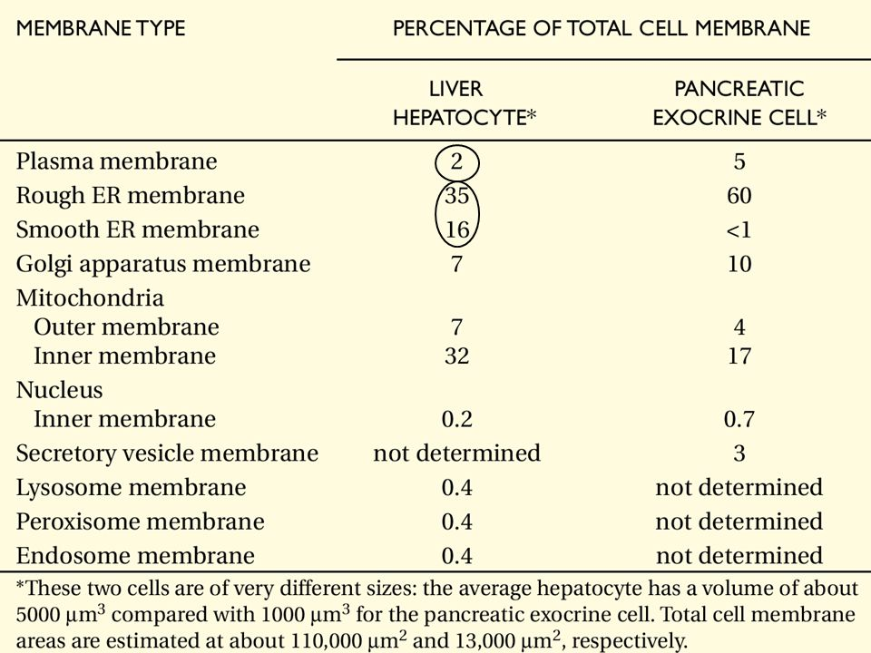 Lundi 24 septembre 2007 Table 12-2. Relative Amounts of Membrane Types in Two Kinds of Eucaryotic Cells.