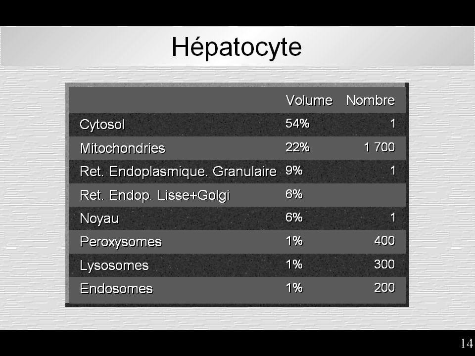 Hépatocyte : surfaces relatives des organites