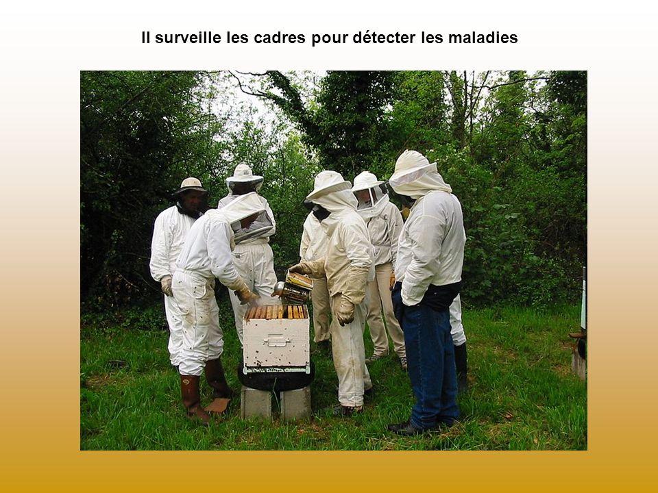 Il surveille les cadres pour détecter les maladies