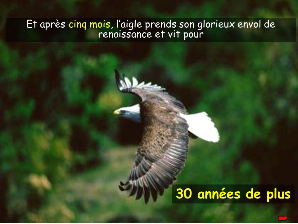 Et après cinq mois, l'aigle prends son glorieux envol de renaissance et vit pour