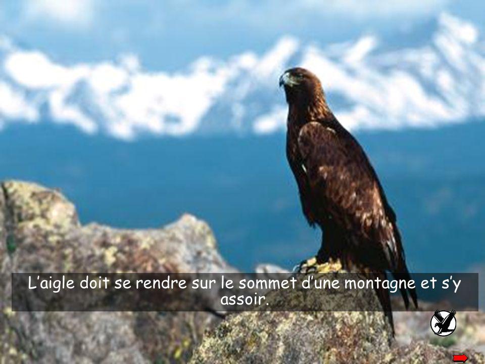 L'aigle doit se rendre sur le sommet d'une montagne et s'y assoir.