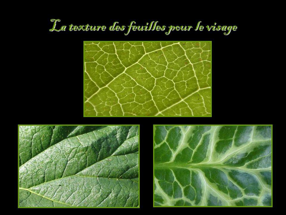 La texture des feuilles pour le visage