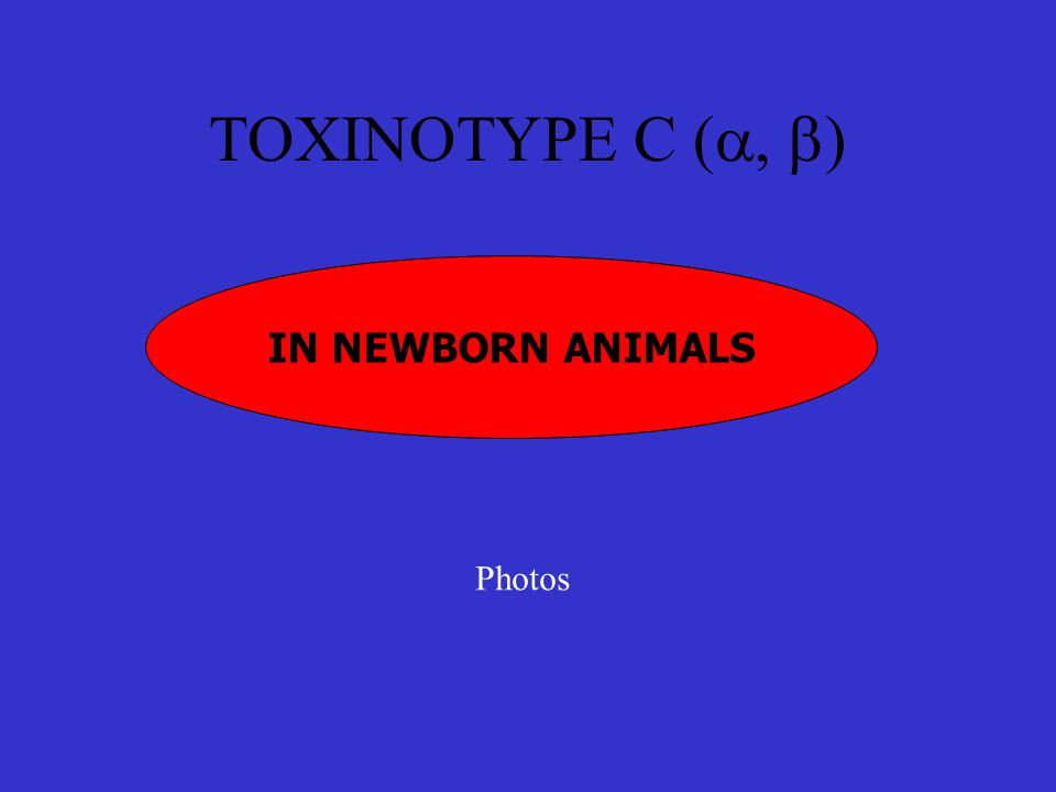 TOXINOTYPE C (a, b) IN NEWBORN ANIMALS Photos