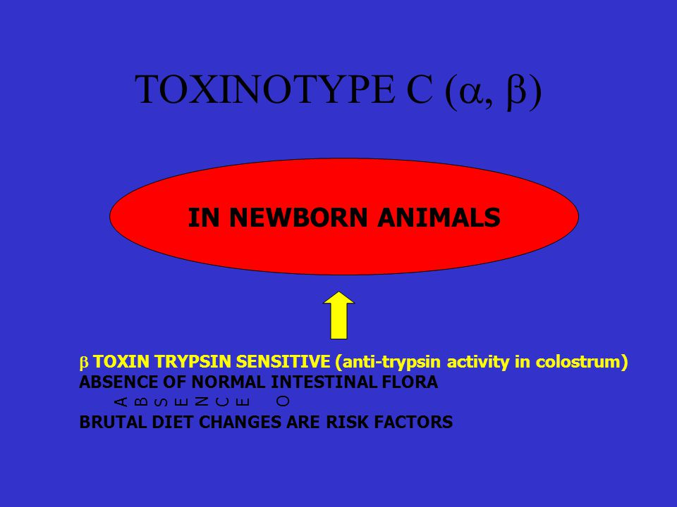 TOXINOTYPE C (a, b) IN NEWBORN ANIMALS
