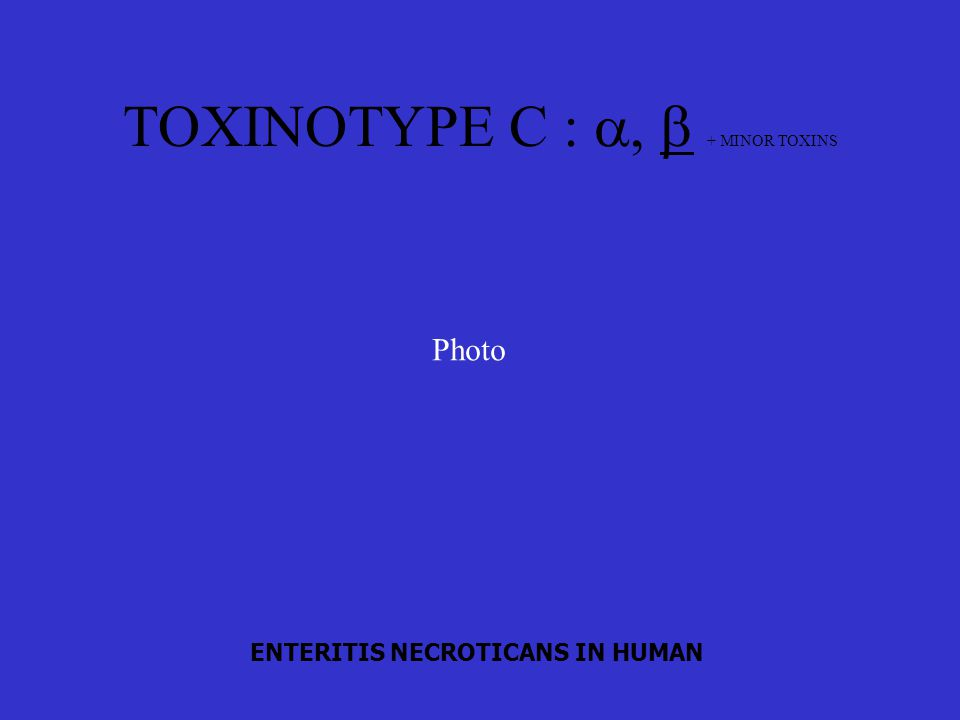 TOXINOTYPE C : a, b + MINOR TOXINS