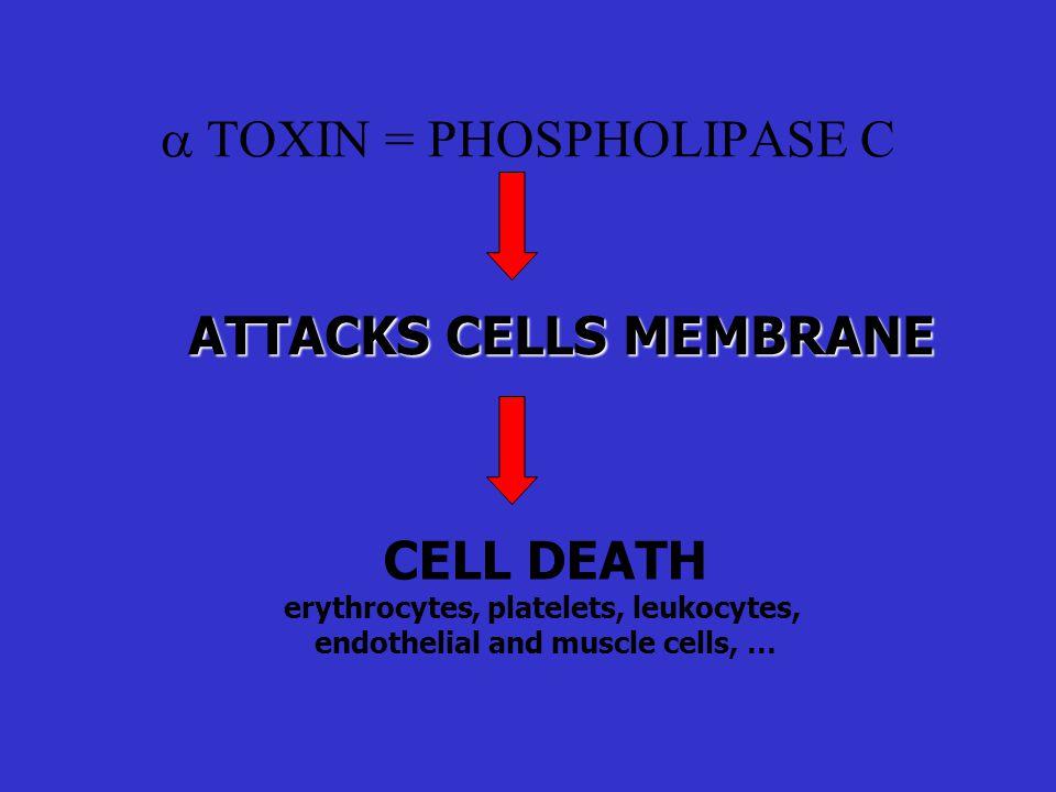 a TOXIN = PHOSPHOLIPASE C