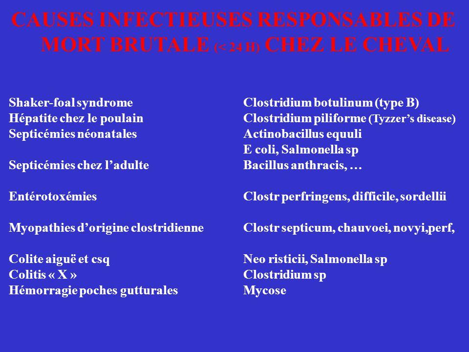 CAUSES INFECTIEUSES RESPONSABLES DE MORT BRUTALE (< 24 H) CHEZ LE CHEVAL