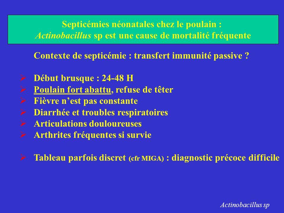 Contexte de septicémie : transfert immunité passive