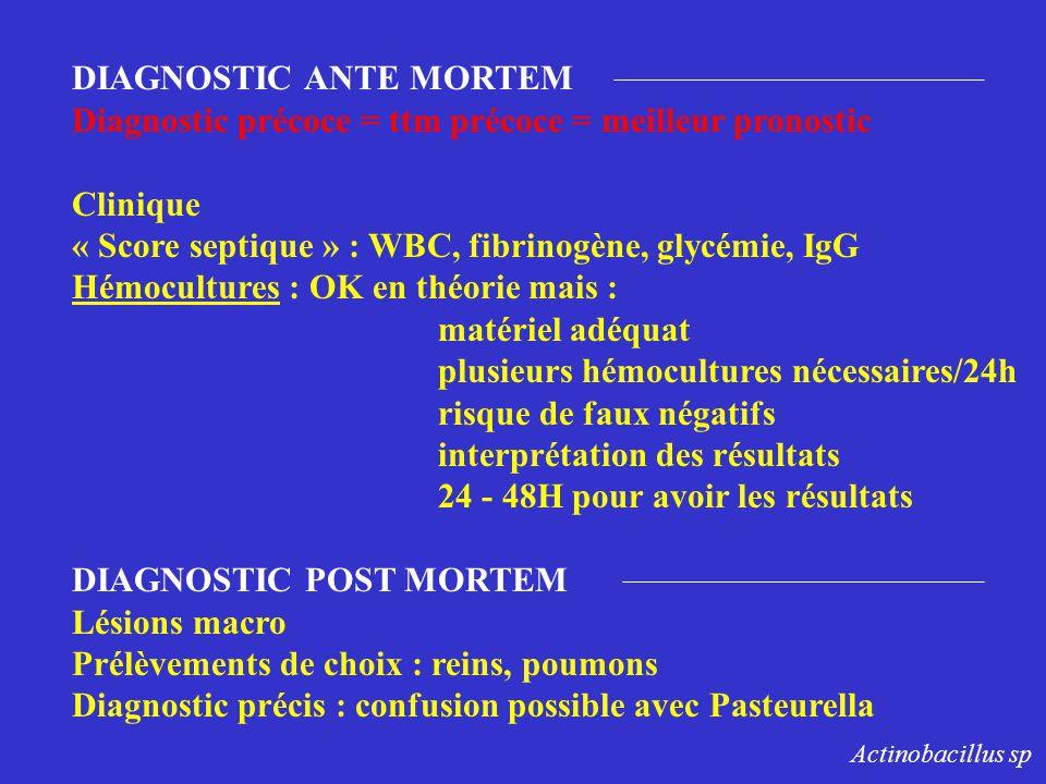 DIAGNOSTIC ANTE MORTEM