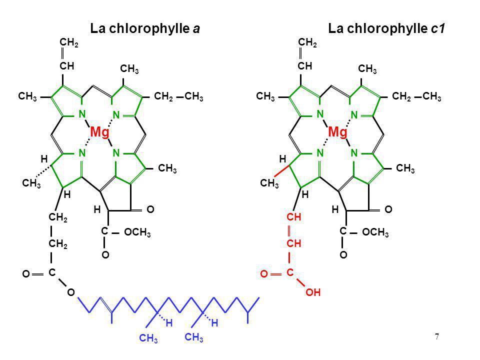 La chlorophylle a La chlorophylle c1 Mg Mg CH2 CH CH3 N H O C OCH3 CH2