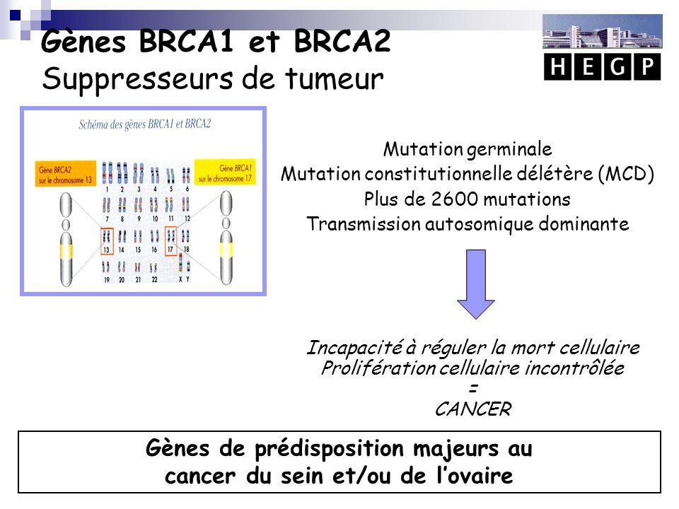 Gènes BRCA1 et BRCA2 Suppresseurs de tumeur