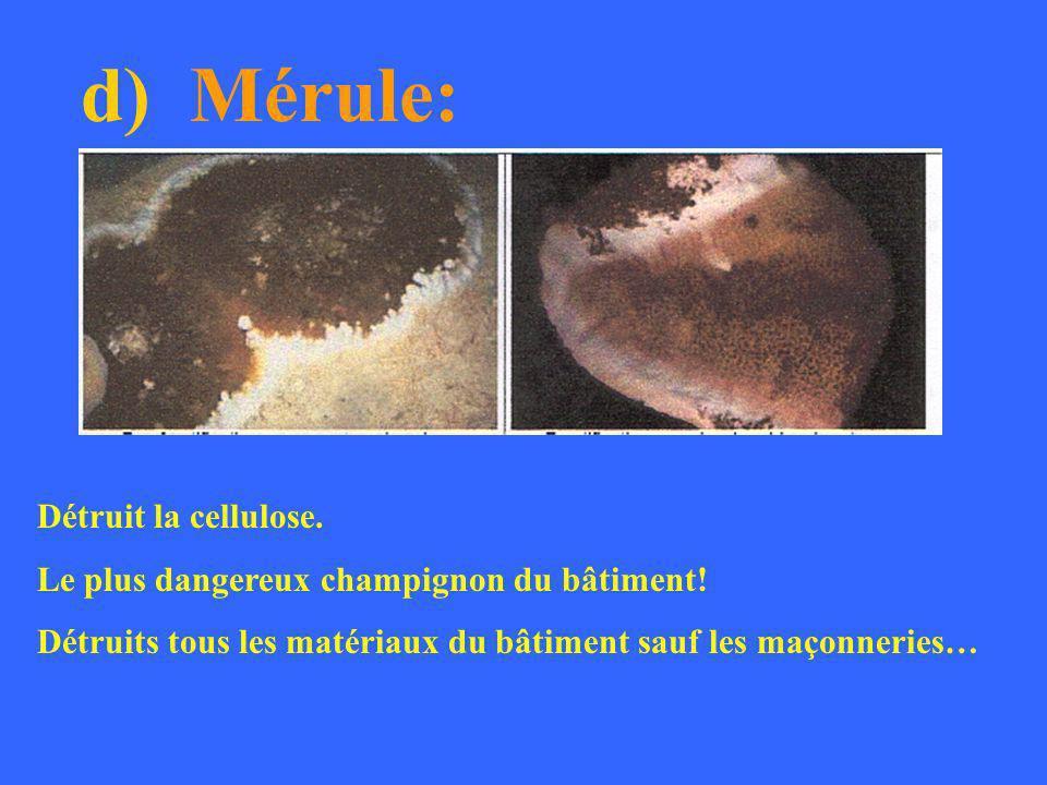 d) Mérule: Détruit la cellulose.