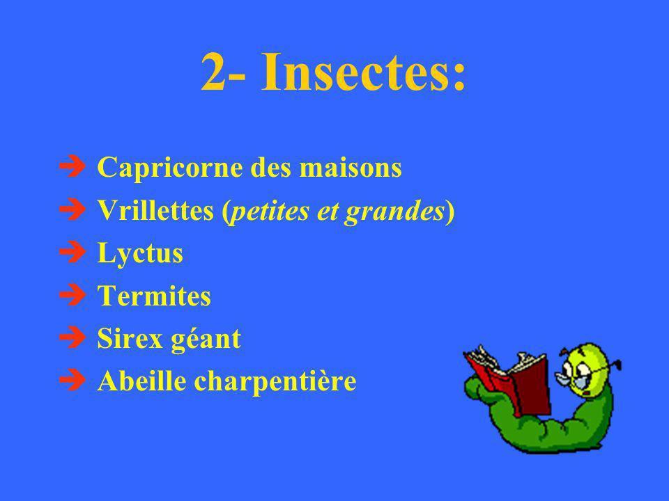 2- Insectes: Capricorne des maisons Vrillettes (petites et grandes)