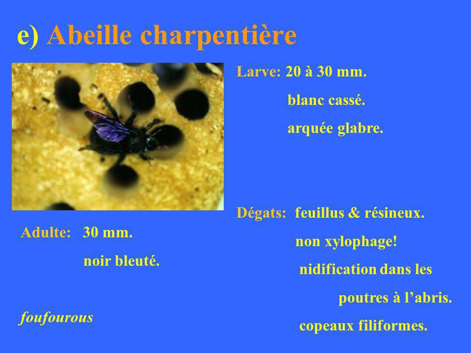e) Abeille charpentière