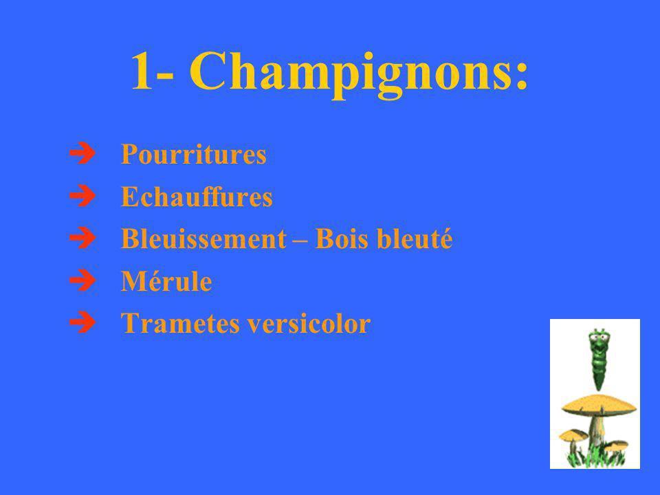 1- Champignons:  Pourritures  Echauffures