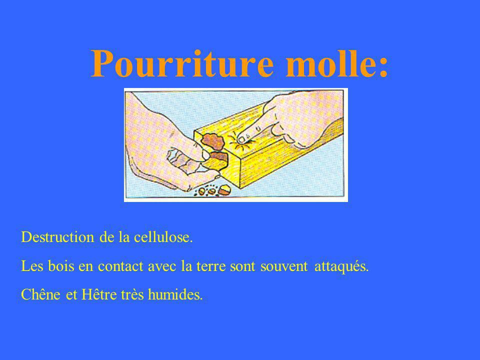 Pourriture molle: Destruction de la cellulose.