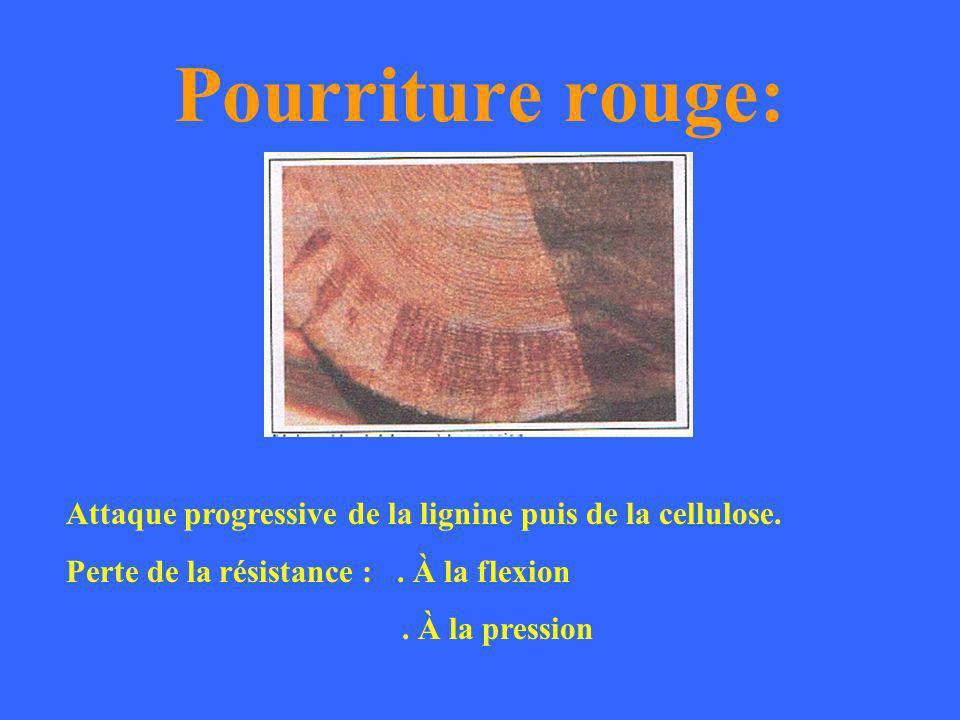 Pourriture rouge: Attaque progressive de la lignine puis de la cellulose. Perte de la résistance : . À la flexion.
