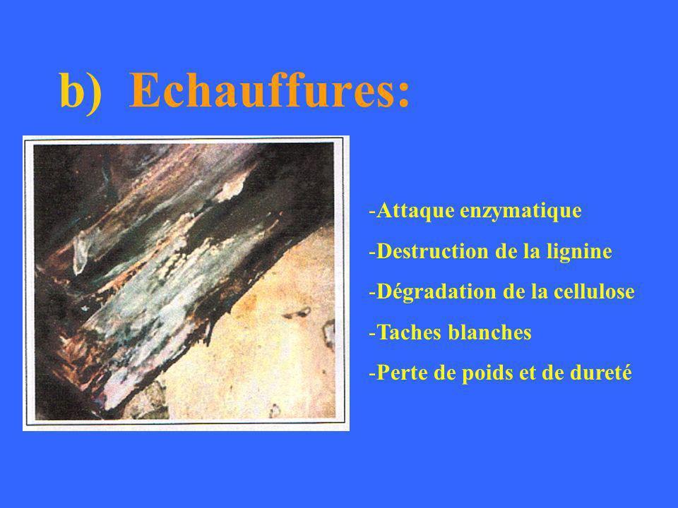 b) Echauffures: Attaque enzymatique Destruction de la lignine