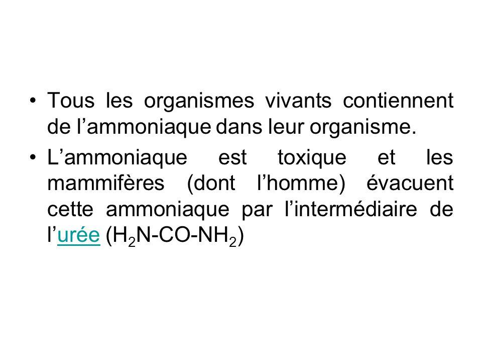 Tous les organismes vivants contiennent de l'ammoniaque dans leur organisme.