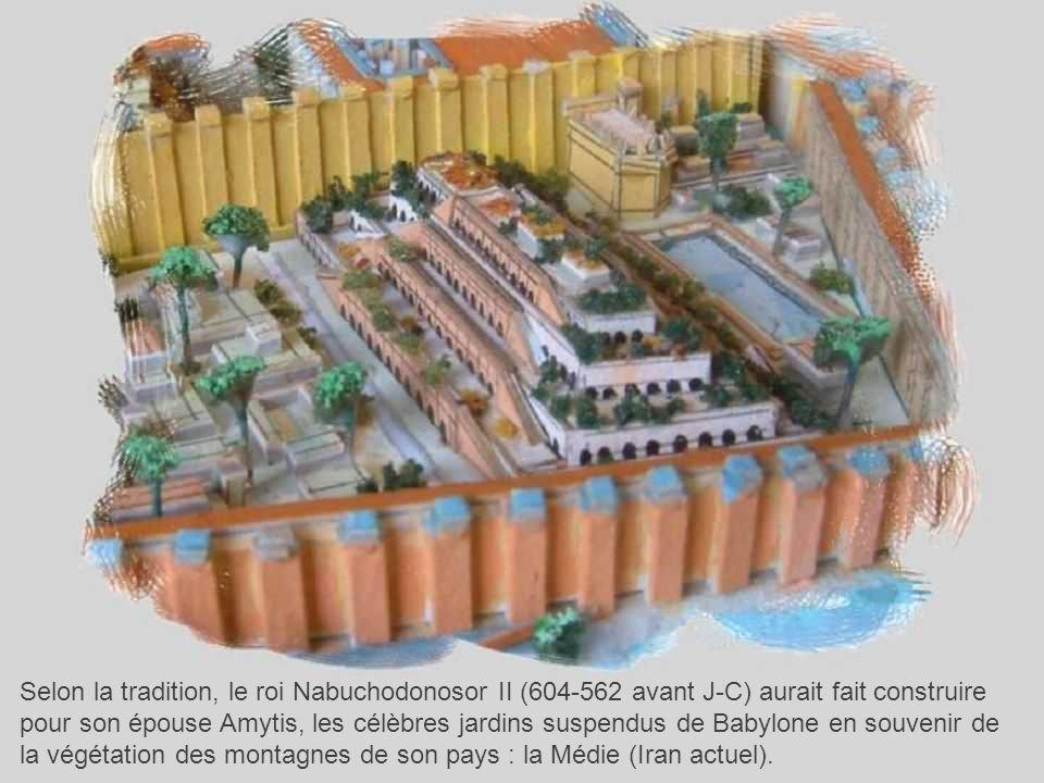 Selon la tradition, le roi Nabuchodonosor II (604-562 avant J-C) aurait fait construire pour son épouse Amytis, les célèbres jardins suspendus de Babylone en souvenir de la végétation des montagnes de son pays : la Médie (Iran actuel).