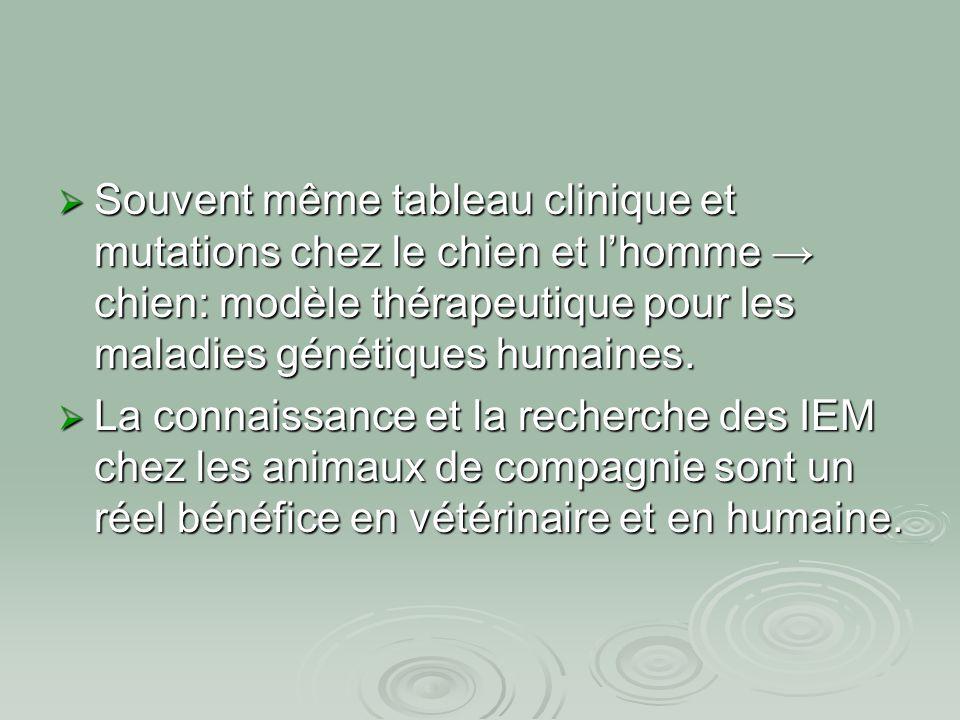 Souvent même tableau clinique et mutations chez le chien et l'homme → chien: modèle thérapeutique pour les maladies génétiques humaines.